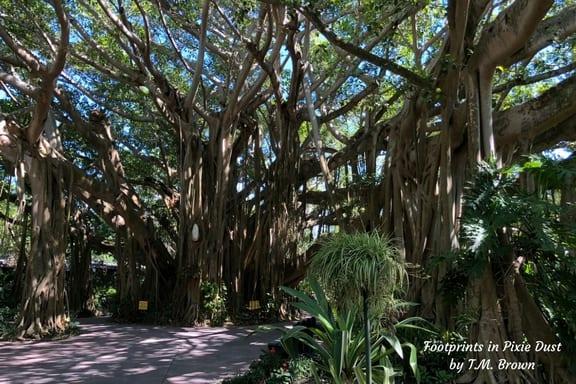 Banyan Tree in Cyprus Gardens at LEGOLAND Florida