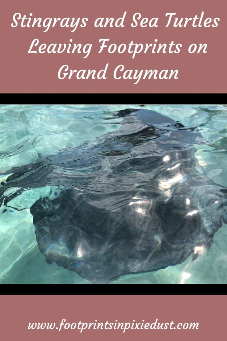 Leaving Footprints on Grand Cayman: #GrandCayman #CaymanIslands #sponsored #CarnivalCruise #Carnivalpartner #stingrays #seaturtles #excursions #cruising #travel #vacation #PTHCarnival