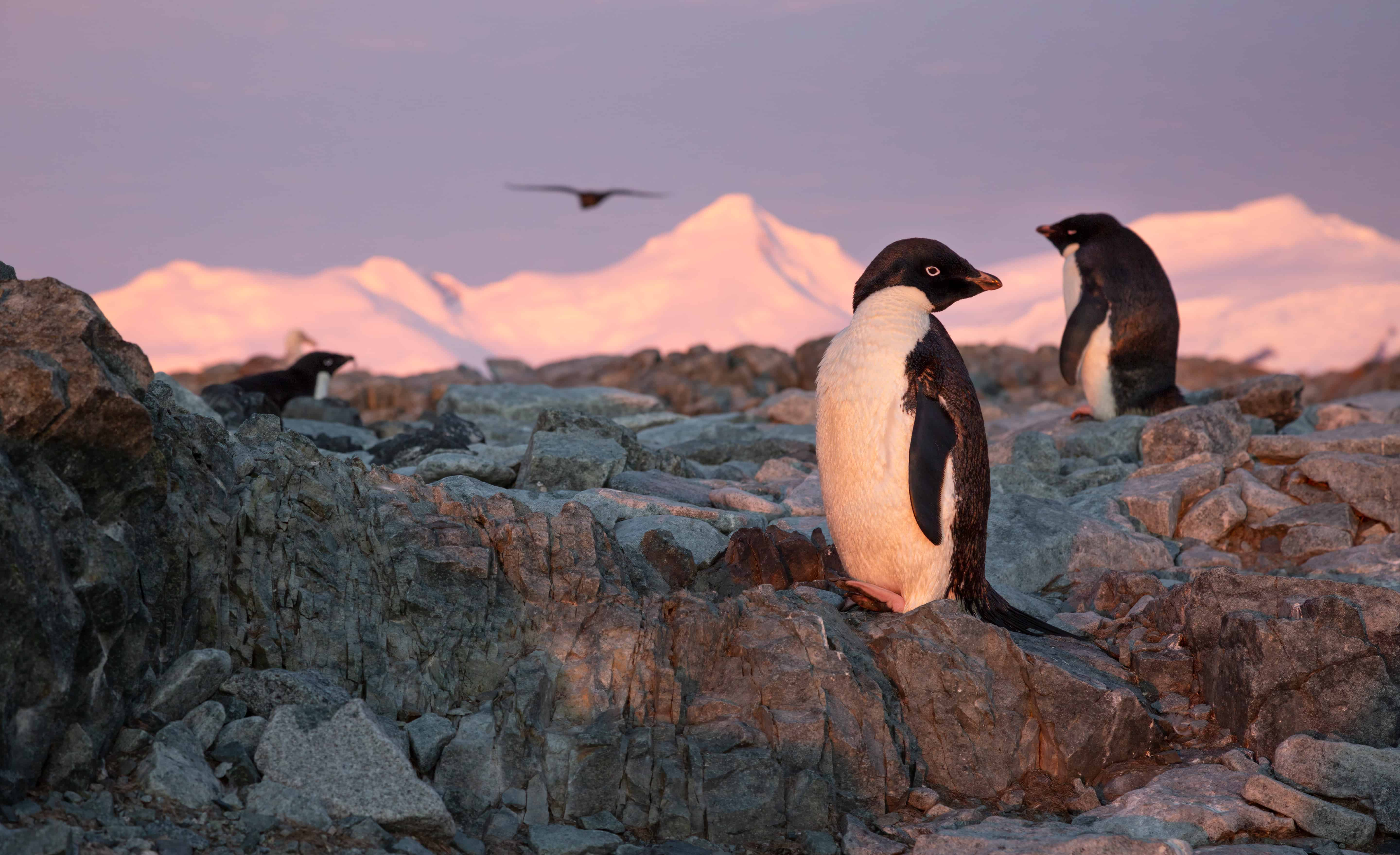 Penguins sitting on rock in Antartica
