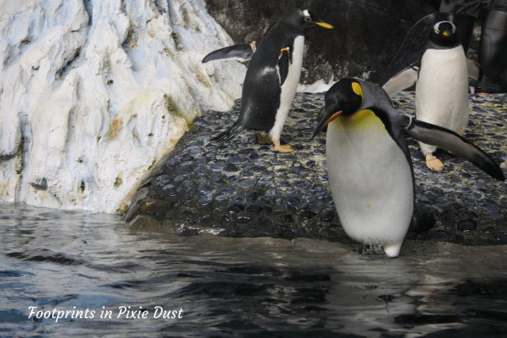 SeaWorld Orlando ~ Antarctica Empire of the Penguin exhibit II