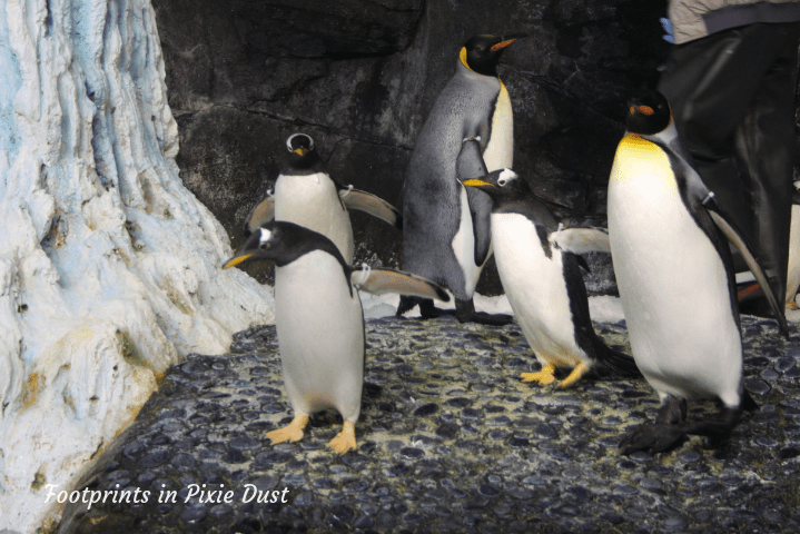 SeaWorld Orlando ~ Antarctica Empire of the Penguin exhibit