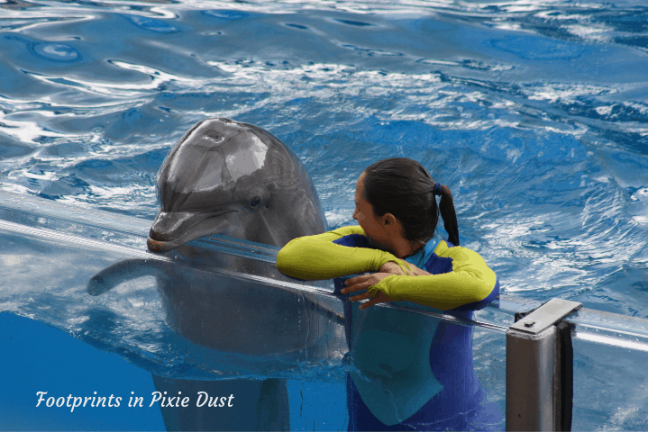 SeaWorld Orlando ~ Dolphin Days
