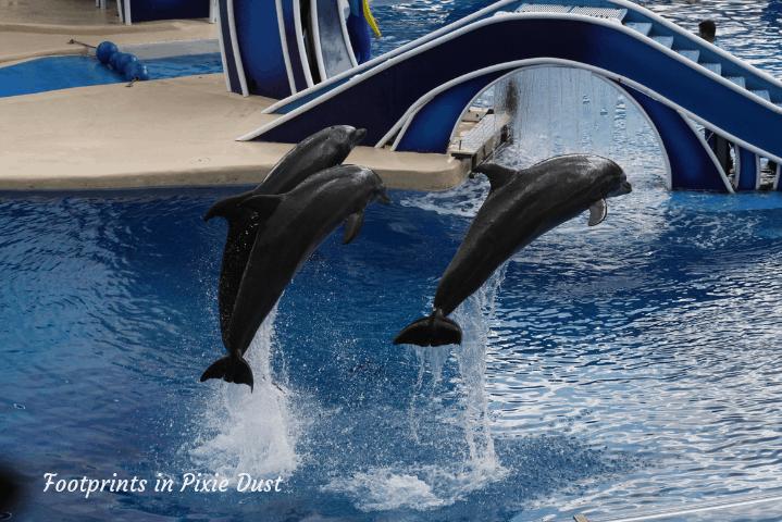 SeaWorld Orlando ~ Dolphin Days II