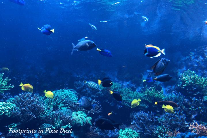 SeaWorld Orlando ~ Manta Aquarium