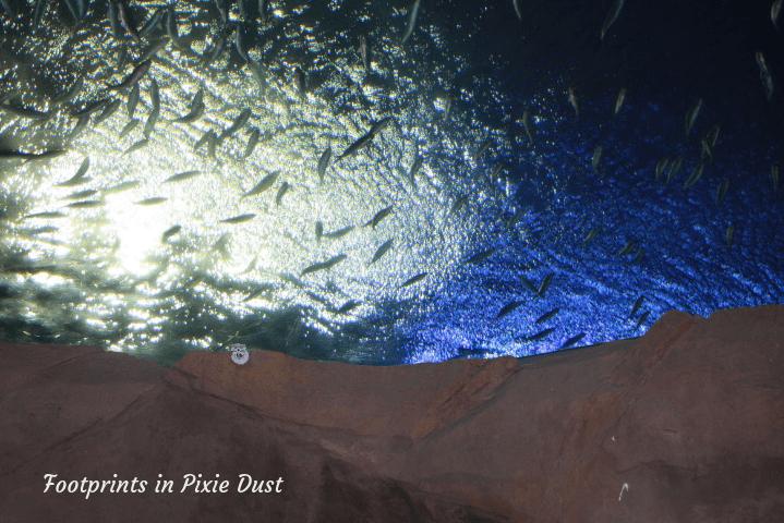 SeaWorld Orlando ~ Overhead Tank in Manta Aquarium