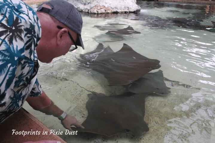 SeaWorld Orlando ~ Stingray Lagoon