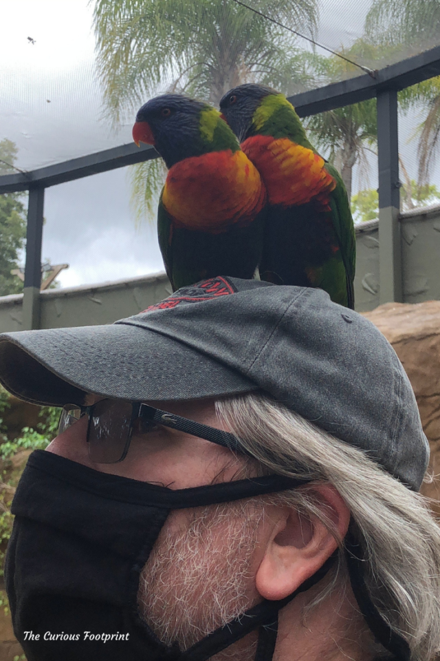 Busch Gardens Christmas Town 2020 - Finding An Aviary Friend or Two